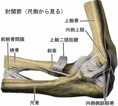 肘(ひじ)が痛い! 外側と内側で原因に違いがあるの?